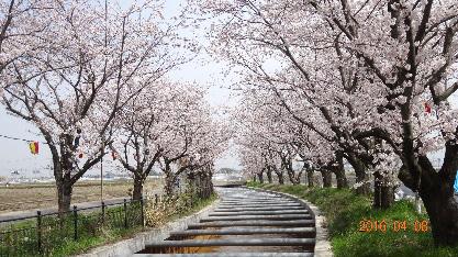 すご堀桜並木