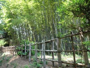 大江山の随所に見られる竹藪