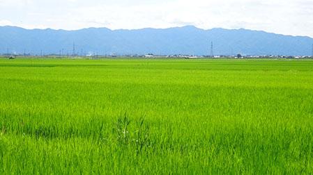 大江山の田園風景