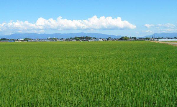 大江山の田園風景(夏)