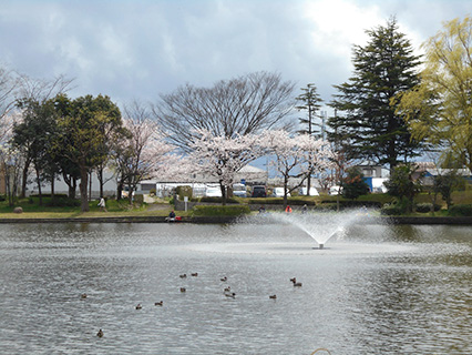 北山池公園の噴水と桜(4月)