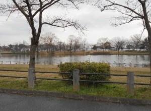 桜桜から見る北山池公園(3月)